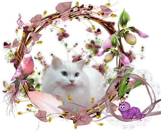 avec chat blanc